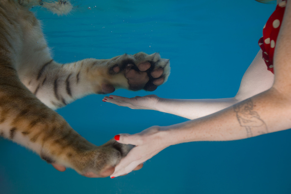 Jessica Segall Un Common Intimacy Tiger Touch 2017